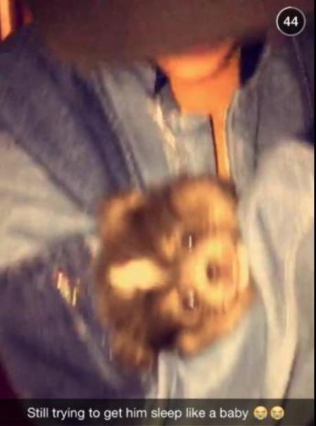 rihanna adopts dog