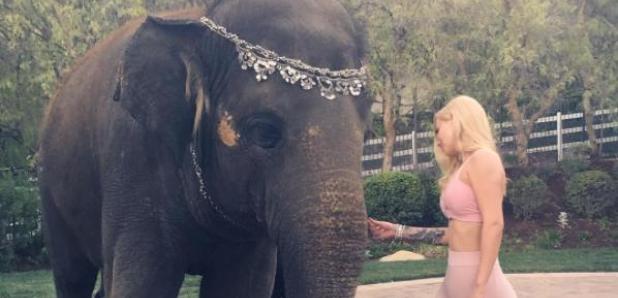 Iggy Azalea and an Elephant